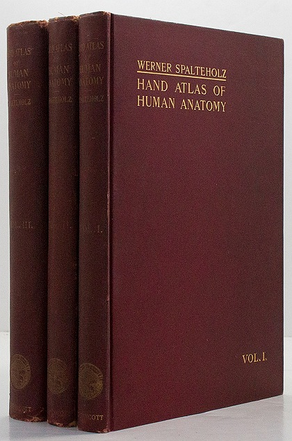 Hand Atlas of Human Anatomy ( 3 Volumes )by: Spalteholz, Werner - Product Image